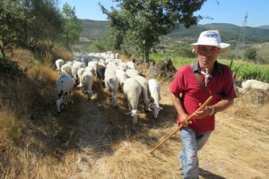 Spend a day with a shepherd in Portugal