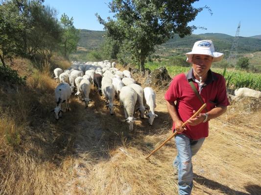 Douro-PastorCreativeTourism