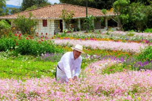 Routes to hydrangea and orchid crops