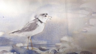 Diane boilard, artiste peintre aquarelliste
