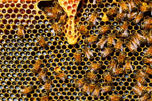 Beekeeping workshop in Quito