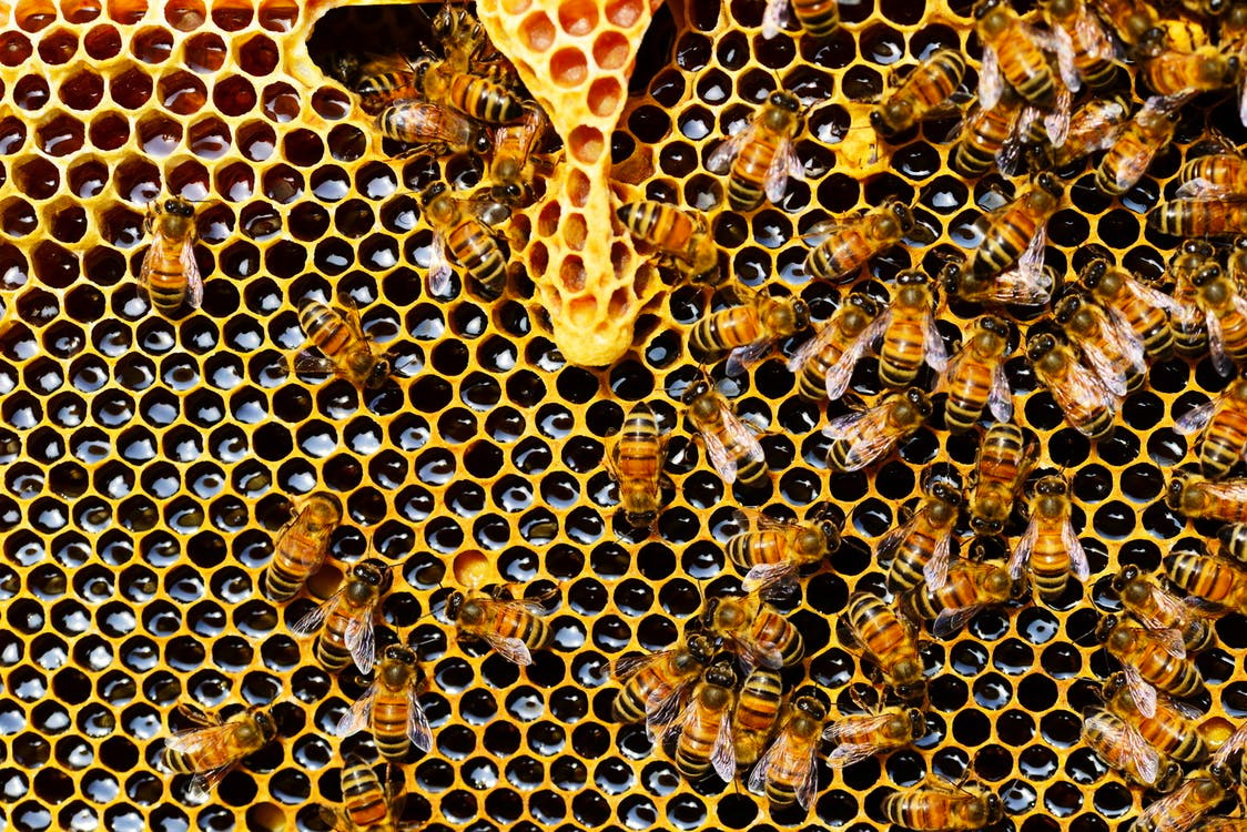 BEEKEEPING WORKSHOP IN QUITO Creative Tourism