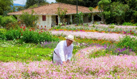 Routes to hydrangea and orchid crops Medellin Colombia