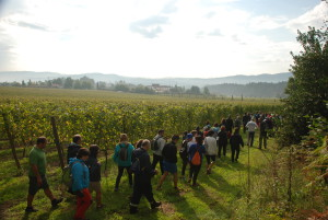 Vines and Wines Experiences